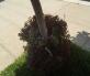 Glimpses Marco Hernandez new street tree wells copy