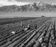 5_Potato Field_Ansel Adams