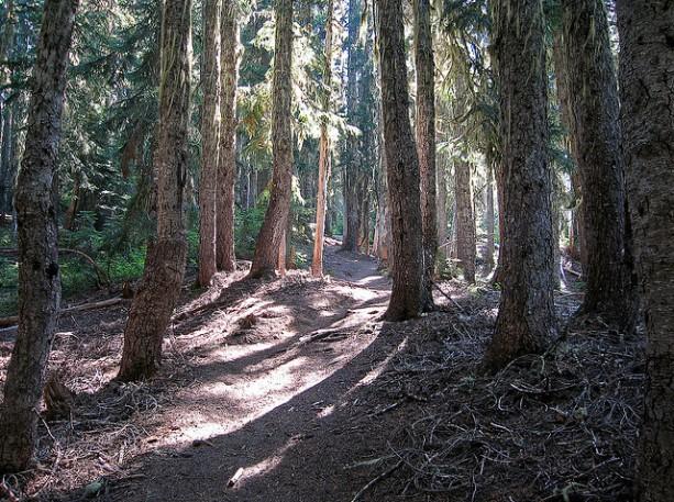 forest_trailisatrap
