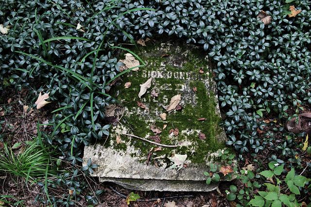 www.zocalopublicsquare.org