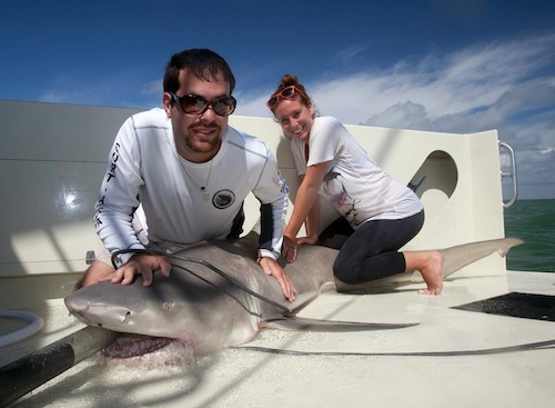 The author with a lemon shark in Everglades National Park in Florida.