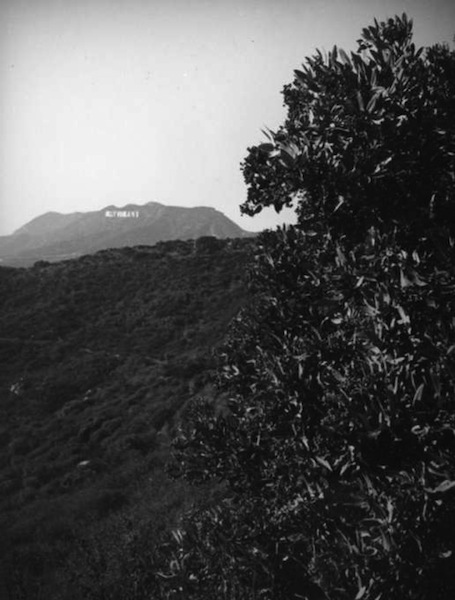 Toyon and the Hollywoodland sign