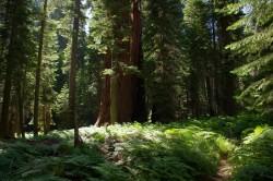 Sierra Nevada hiking trail
