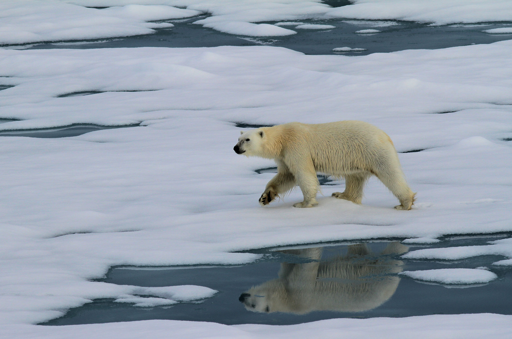Sorry, Polar Bears: There's No Quick Fix for Those Melting Glaciers