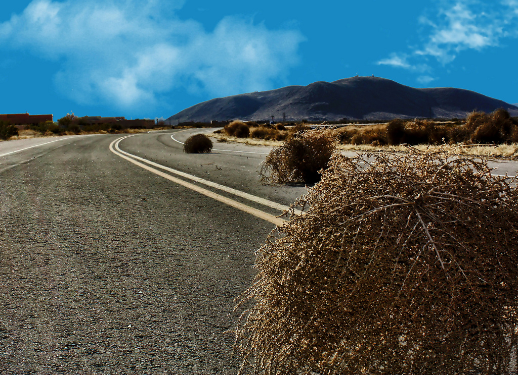 Where Do Tumbleweeds Come From?