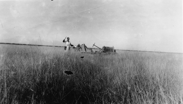 The tall summertime grasses that used to grow in the Sonoran Savanna Grasslands at an unknown homestead in the Casa Grande, Arizona, area.  Image credit: Casa Grande Valley Historical Society