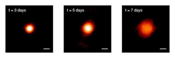 Images of the expanding fireball of Nova Delphinus 2013 from three nights during the first week after the explosion. The white scale bar is 2.3 astronomical units in length (2.3 times the distance between the Earth and sun). Image courtesy Gail Schaefer