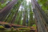 bigredwood