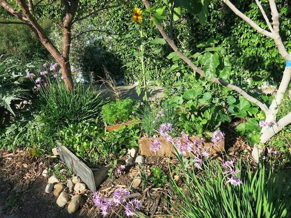 Finley garden