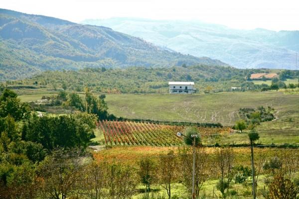DePalma - carolei countryside
