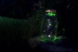 fireflies jar