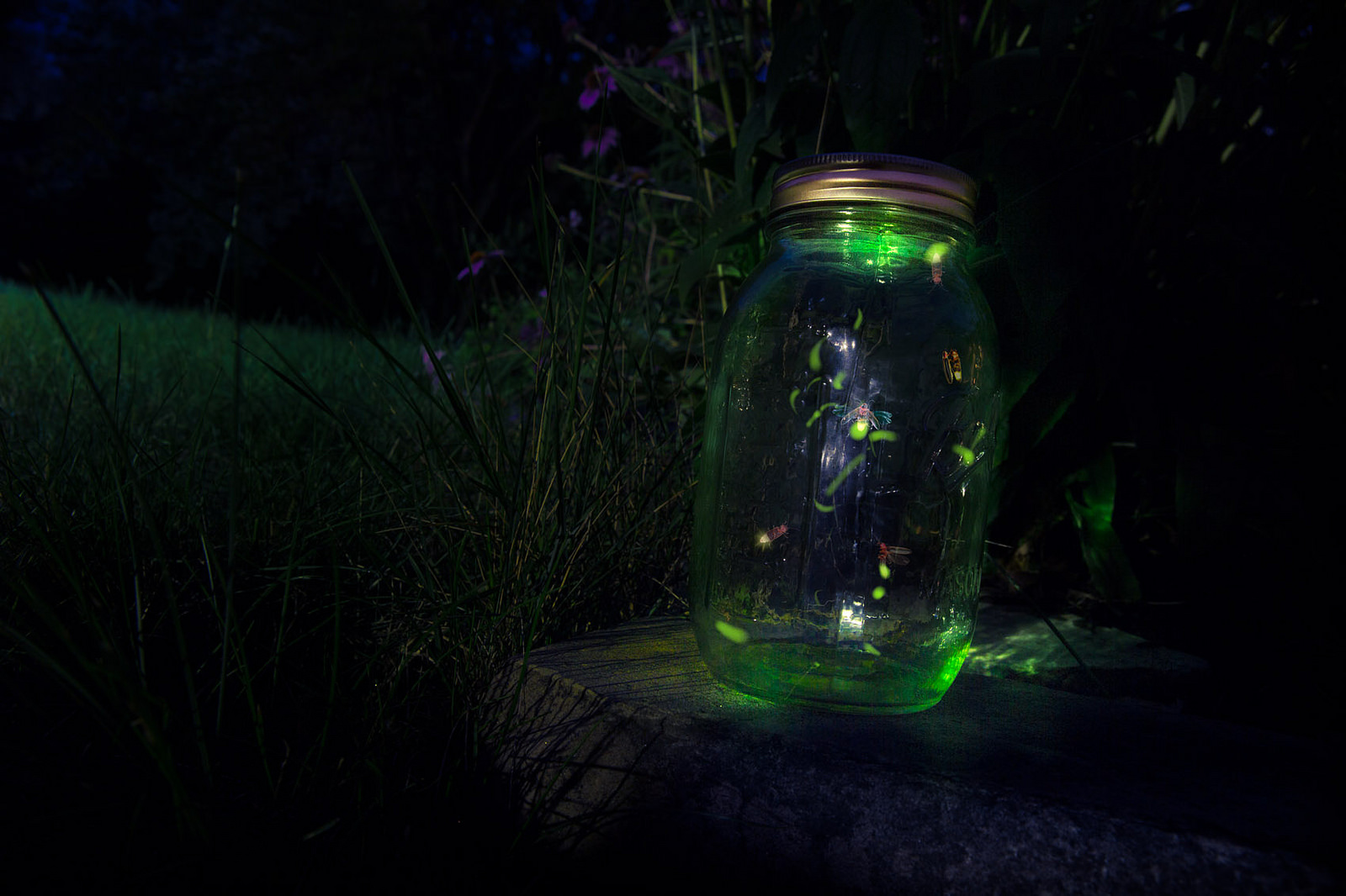 how to keep fireflies alive in a jar
