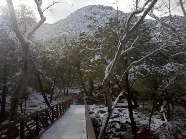paulina pineda madera canyon2