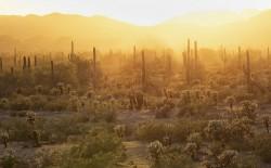 Linsteadt desert at dusk