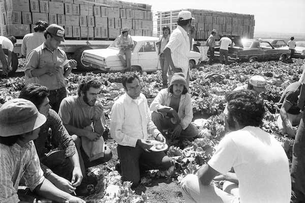 A UFW organizer meets with farmworkers in a Salinas lettuce field in 1975