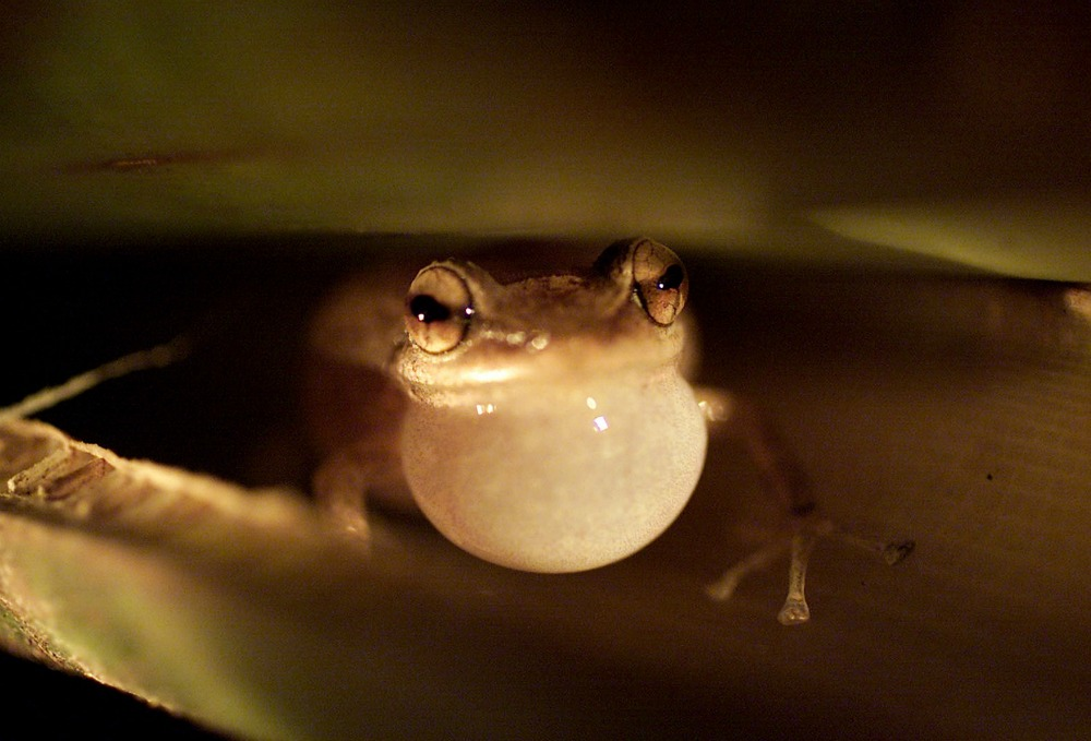 When Frogs Sing Their Evening Song, Listen for Nature's