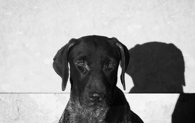 Are Black Dogs Unadoptable?