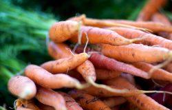 egland-on-food-policy-carrotts