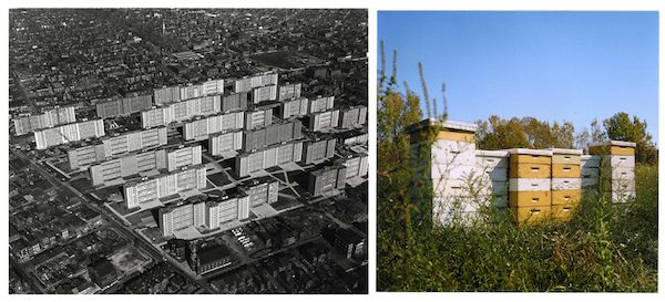 Left: an aerial view of Pruitt-Igoe. Right: a sculpture by Juan William Chávez referencing the housing development, built from abandoned beehives. Left image courtesy of Missouri History Museum. Right image courtesy of Juan William Chávez.