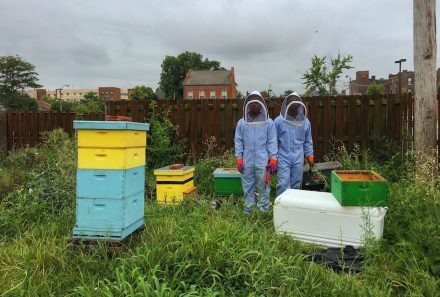 A bee sanctuary, inspired by a forest that overtook the site of a long-shuttered housing project, provides summer jobs for youth in St. Louis, Missouri. Photo courtesy of Juan William Chávez.