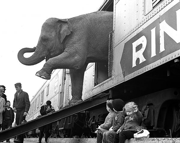 A Ringling Brothers Circus elephant walks out of a train car as young children watch in the Bronx railroad yard in New York City, April 1, 1963.  Photo by Associated Press.