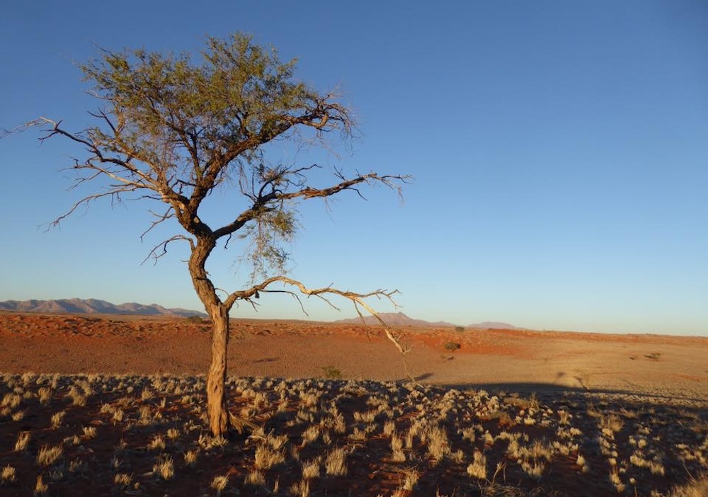 NamibRand Nature Reserve, Namibia. Photo by Gregory Rodriguez.