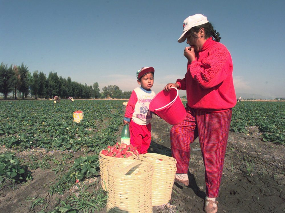 migrant farm workers essay
