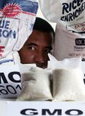 "Danilo Ocampo, a genetic engineering campaigner of the environmentalist group Greenpeace, peers in between sacks of US long grain rice that made it to the shelves of a high-end supermarket chain in the Philippines which is allegedly has been confirmed to be contaminated by GMO (Genetically-modified Organism) during a news conference Thursday April 24, 2008 at Manila's Quezon city. In their statement, Greenpeace, which is awaiting results of the tests conducted on government-distributed US rice, is demanding the government to ""protect the country's staple food from unsafe and unproven GMO technologies by stringently testing US rice imports and rejecting GMO rice varieties."" (AP Photo/Bullit Marquez)"