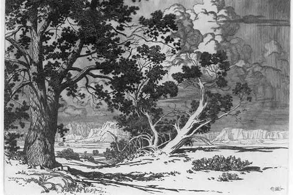 pinon tree coloring pages | What an Arroyo Can Do | Poetry | Zócalo Public Square