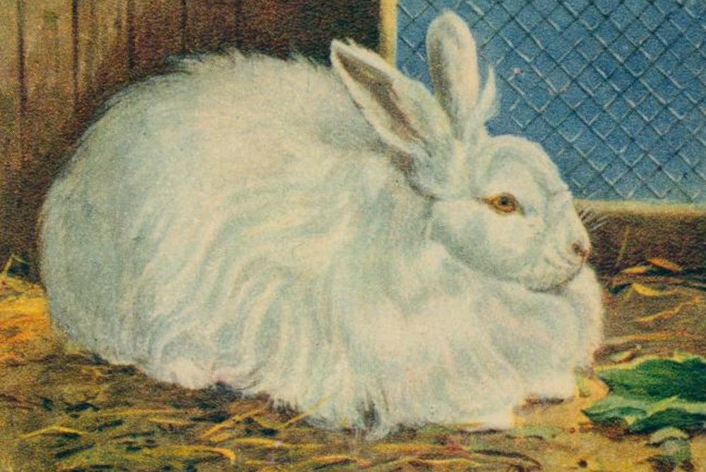 Rabbit Skin Pelt | Zocalo Public Square • Arizona State University • Smithsonian