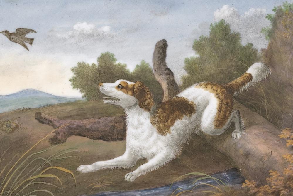 Dog Song | Zocalo Public Square • Arizona State University • Smithsonian