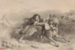 Wolf Package | Zocalo Public Square • Arizona State University • Smithsonian