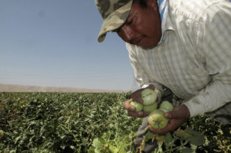 How Can We Make Farm Work Healthier? | Zocalo Public Square • Arizona State University • Smithsonian