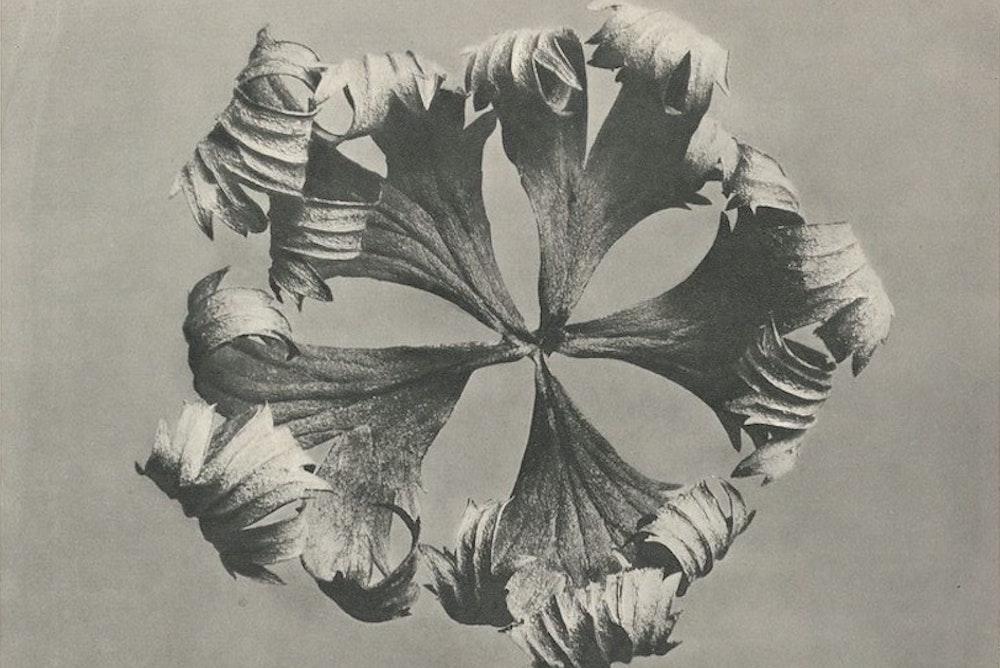 Garden Divination | Zocalo Public Square • Arizona State University • Smithsonian