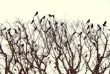 a tree of crows can never sing a festive carol   Zocalo Public Square • Arizona State University • Smithsonian